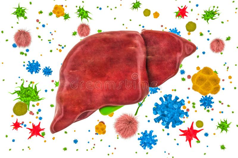 Liver with viruses and bacteria. Liver or gallbladder disease concept, 3D rendering vector illustration