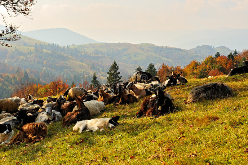Download Livestock stock image. Image of farming, distance, animals - 29365361