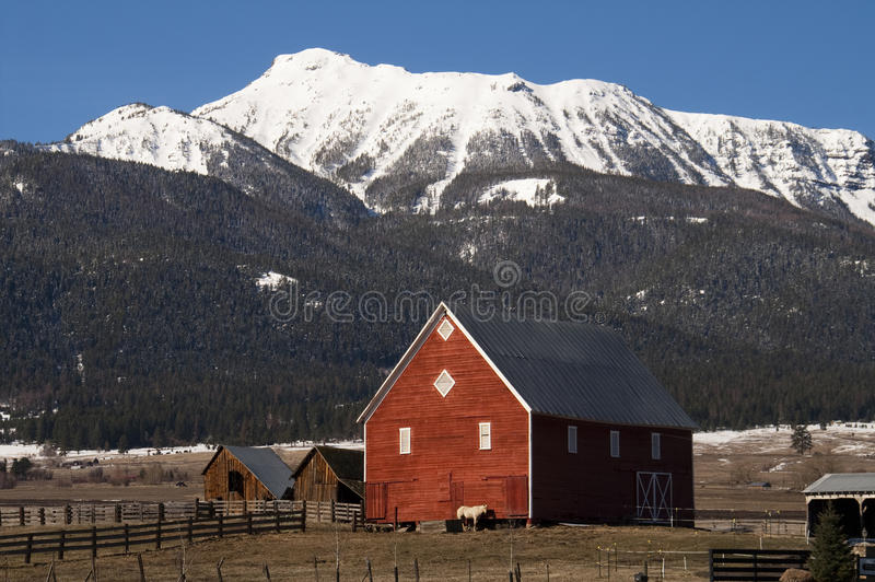 Livestock Wind Break Horse Leaning Red Barn Mountain Ranch royalty free stock photos