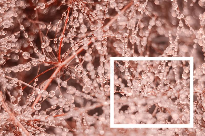 Reative layout made from drops of fresh dew on the branches a with a white drawn frame. stock image