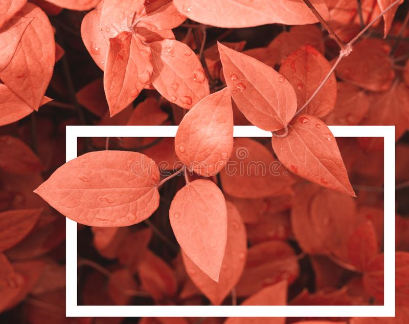 Creative layout made of leaves a with a white drawn frame royalty free stock images