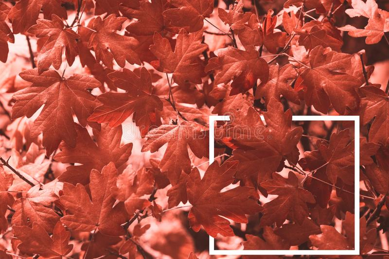 Creative layout made of leaves a with a white drawn frame. royalty free stock image