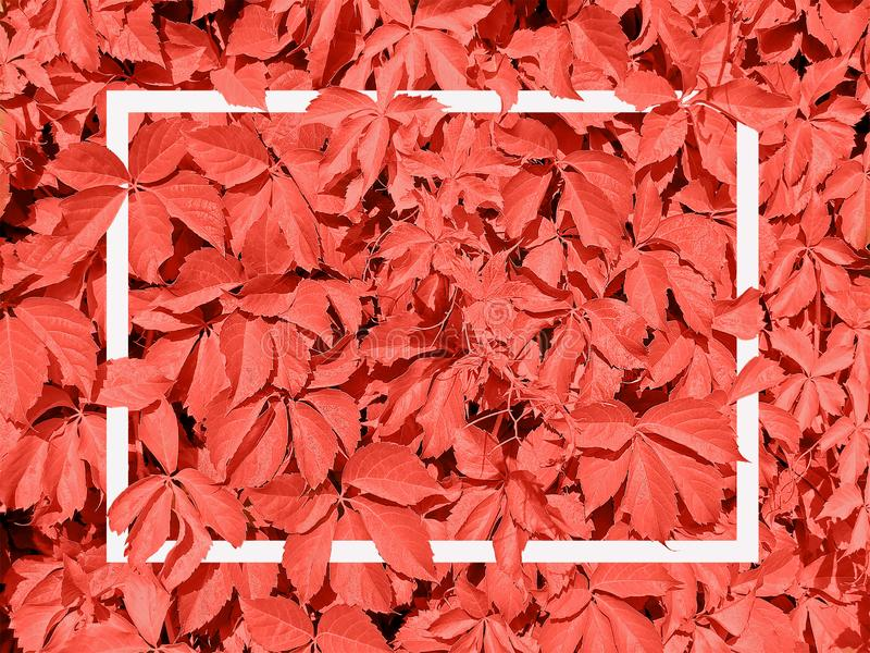 Living Coral background made of leaves and white frame Greeting card. Pantone color of the year 2019. Nature concept. stock photography