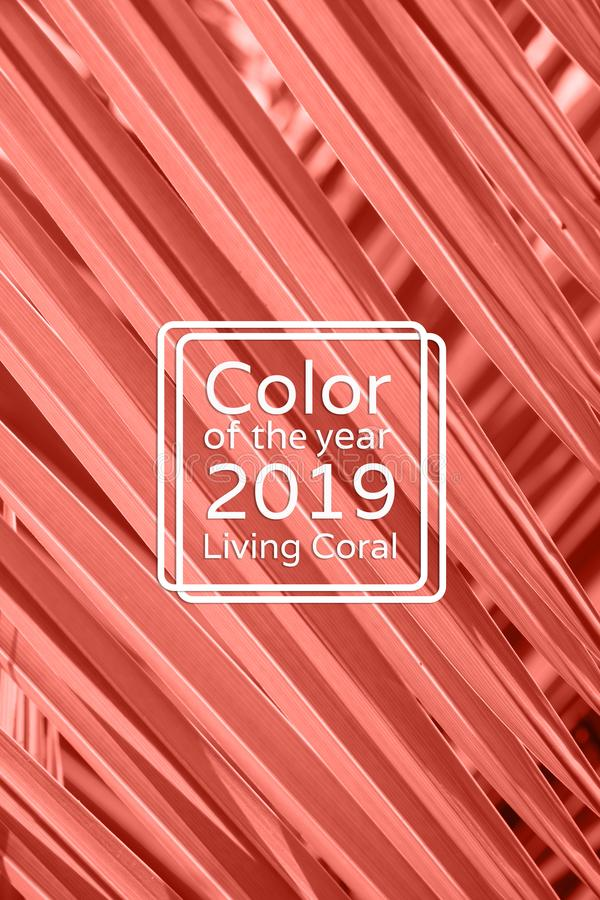 Living Coral color palm leaf background. royalty free stock photography