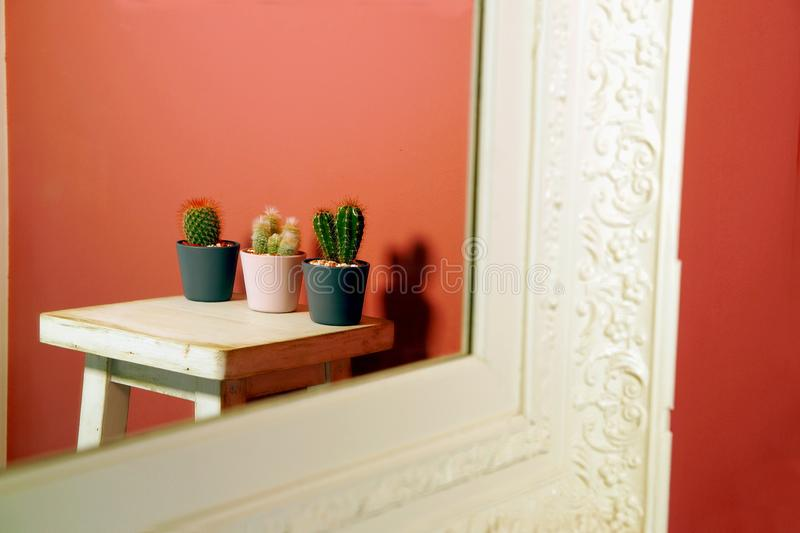 Living Coral color of the Year 2019. Background with cactus reflecting in the mirror against a vibrant coral pink background stock photos