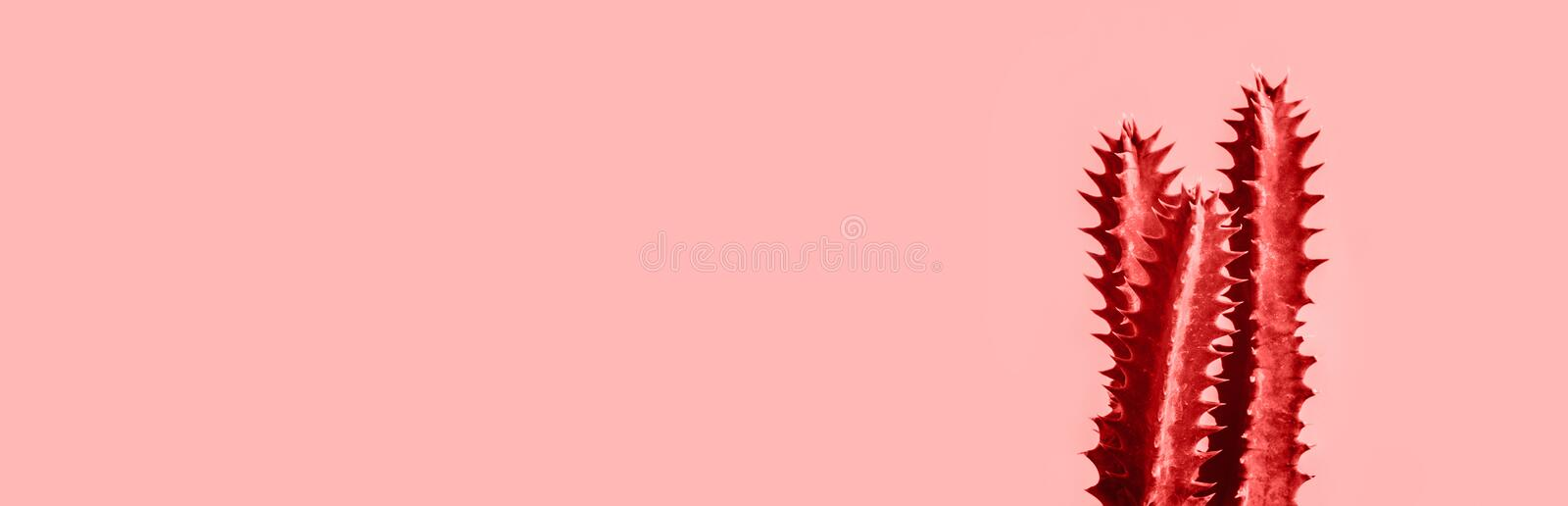 Living Coral color of year 2019 with Exotic cactus banner background stock photos
