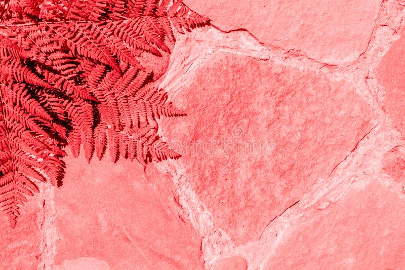Living Coral colored fashion fern background. Trendy tropical leaf close-up. Creative Surreal Style. Fresh fern frame royalty free stock photo