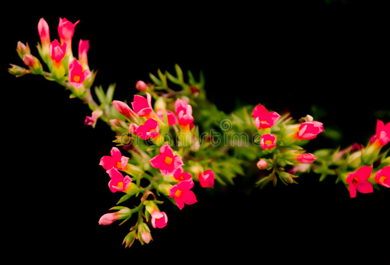 Living flowers royalty free stock photos