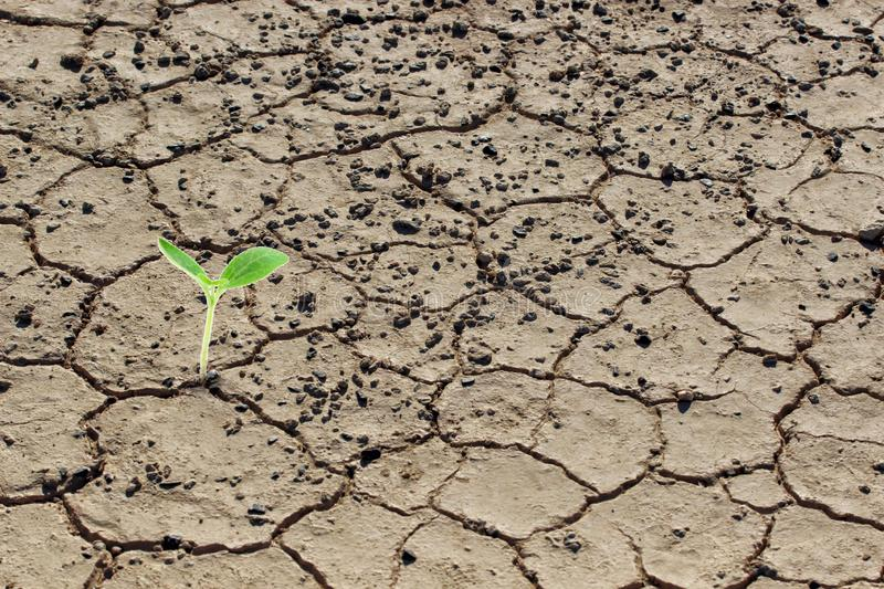 Living with plant drought, Reborn plant, crack ground. royalty free stock photo