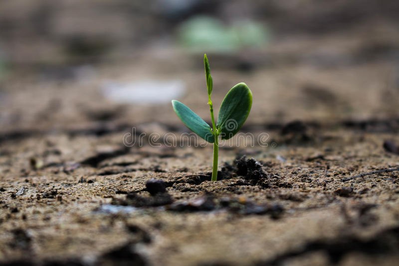 Living with tree drought. royalty free stock photography