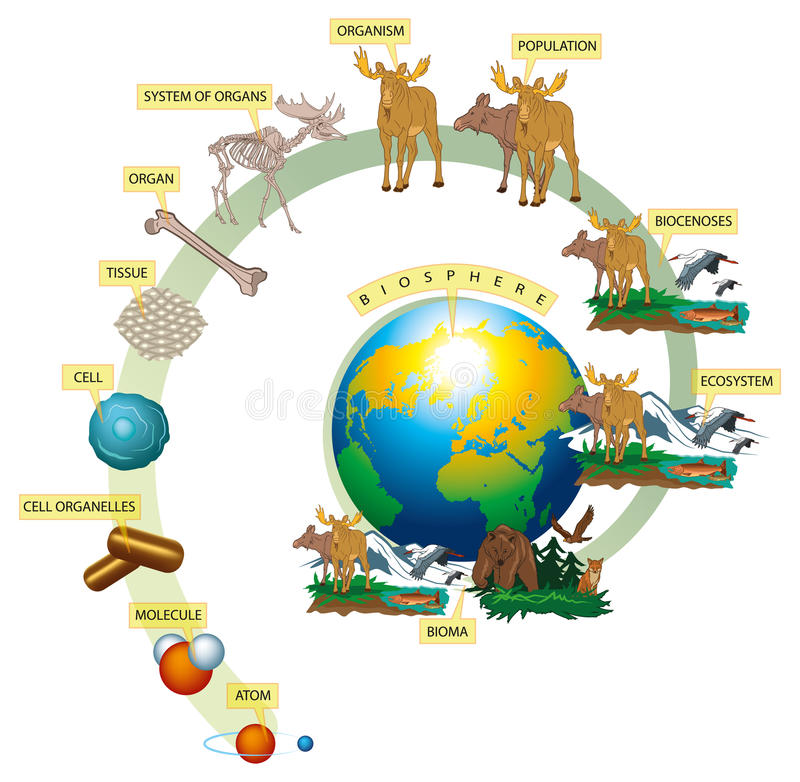 Living world. Organization levels of wildlife on Earth vector illustration