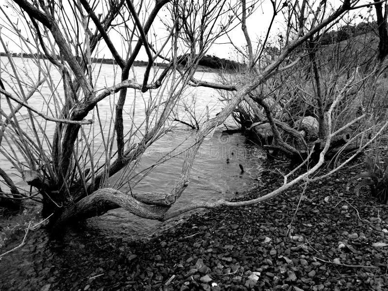 Livlös buske i vattnet royaltyfria foton