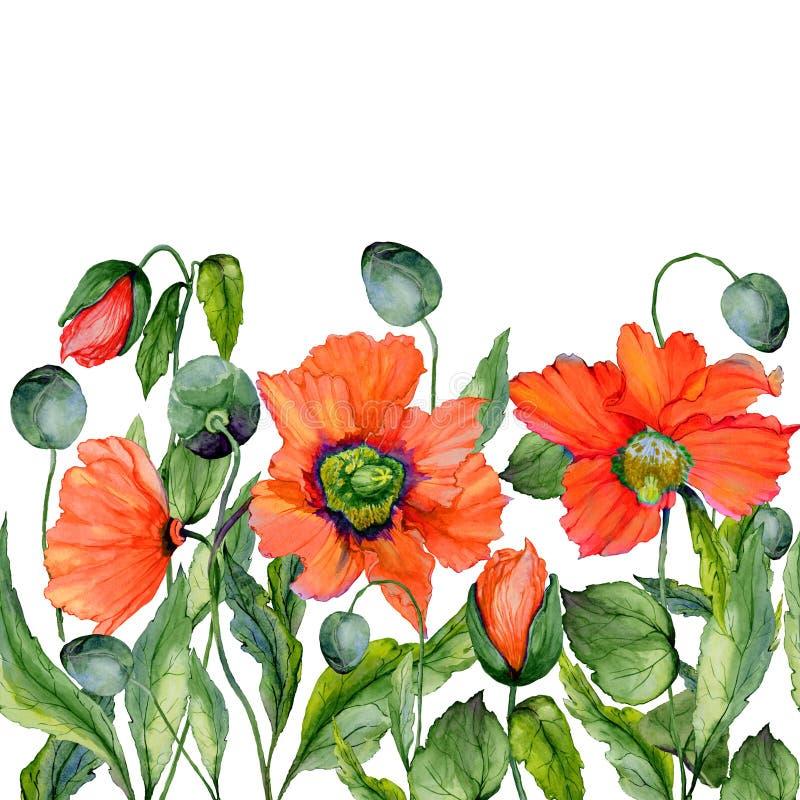 Livlig sommar- eller vårbakgrund Den härliga röda vallmo blommar på vit bakgrund Square formar seamless blom- modell stock illustrationer
