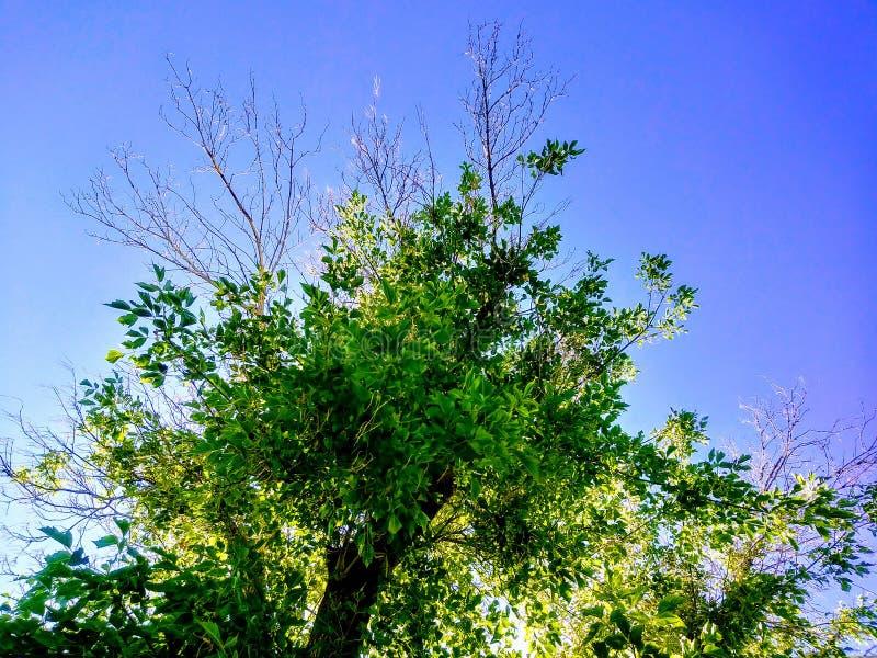 Livligt träd royaltyfria bilder