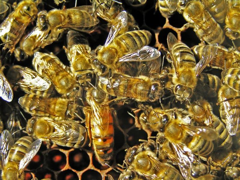 Livmoder bland bin.