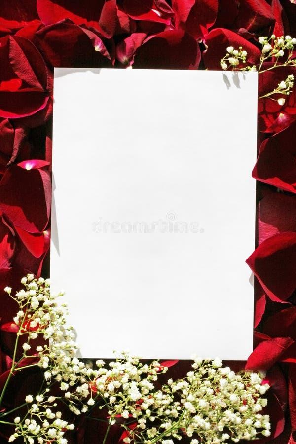 Livre blanc au-dessus des roses images libres de droits