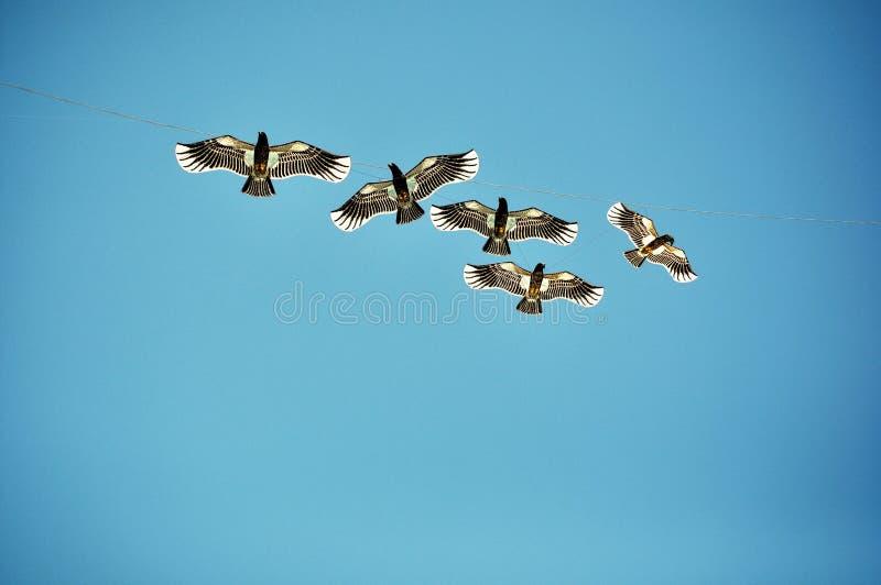 Livre como pássaros foto de stock royalty free