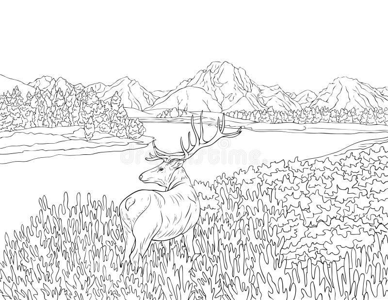 Livre De Coloriage Adulte Paginent Une Image Mignonne De Paysage De Nature Pour La Detente Illustration De Vecteur Illustration Du Paginent Coloriage 127997535