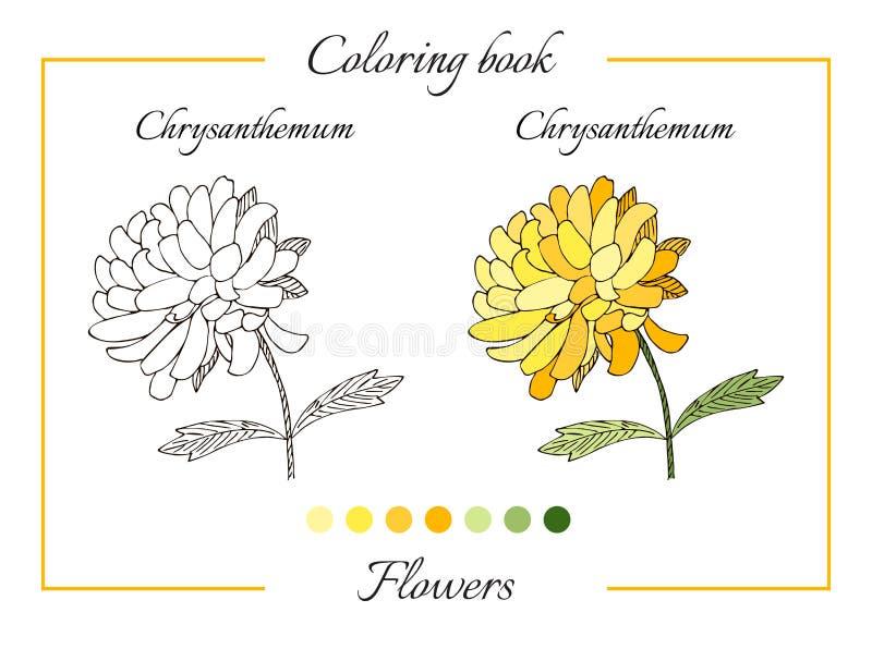 Livre de coloriage avec la belle fleur de chrysanthème illustration libre de droits