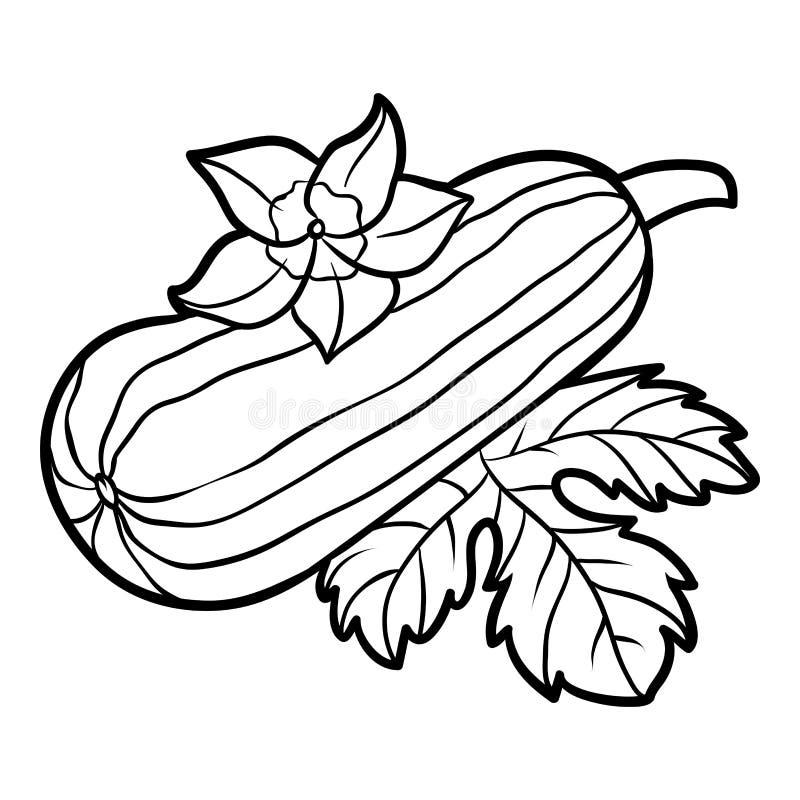 Livre de coloriage, courge de moelle /courgette illustration libre de droits