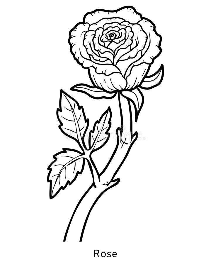 livre de coloriage fleur rose illustration de vecteur illustration du pr amour 79732807. Black Bedroom Furniture Sets. Home Design Ideas