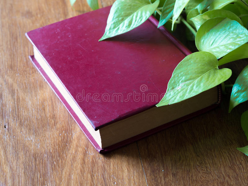 Livre et feuilles image libre de droits