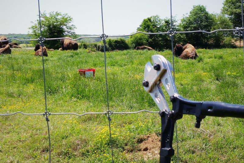 Livre o búfalo fotografia de stock