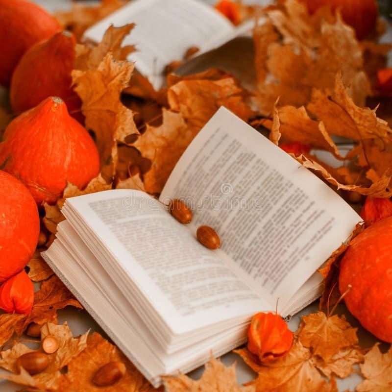 Livre ouvert avec des feuilles images libres de droits