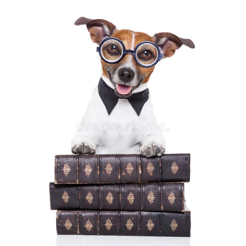 Livres de lecture de chien photo stock