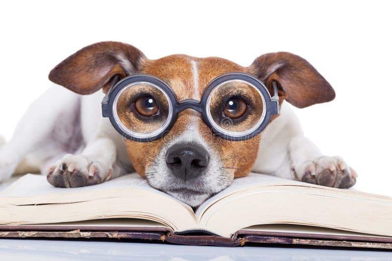 Livres de lecture de chien images stock
