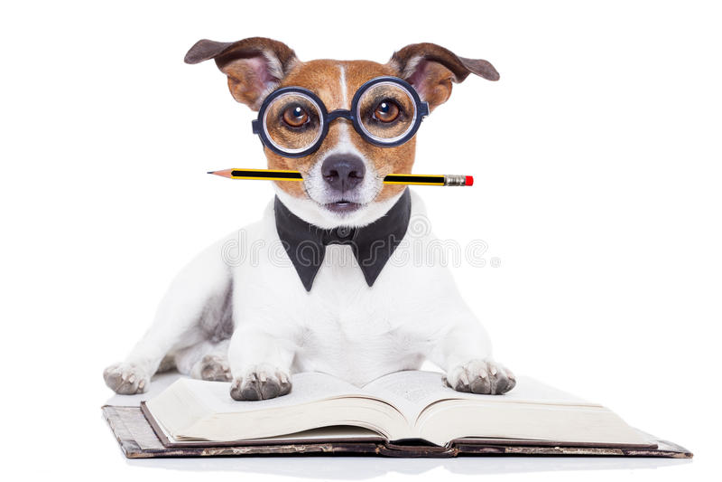 Livres de lecture de chien photo libre de droits