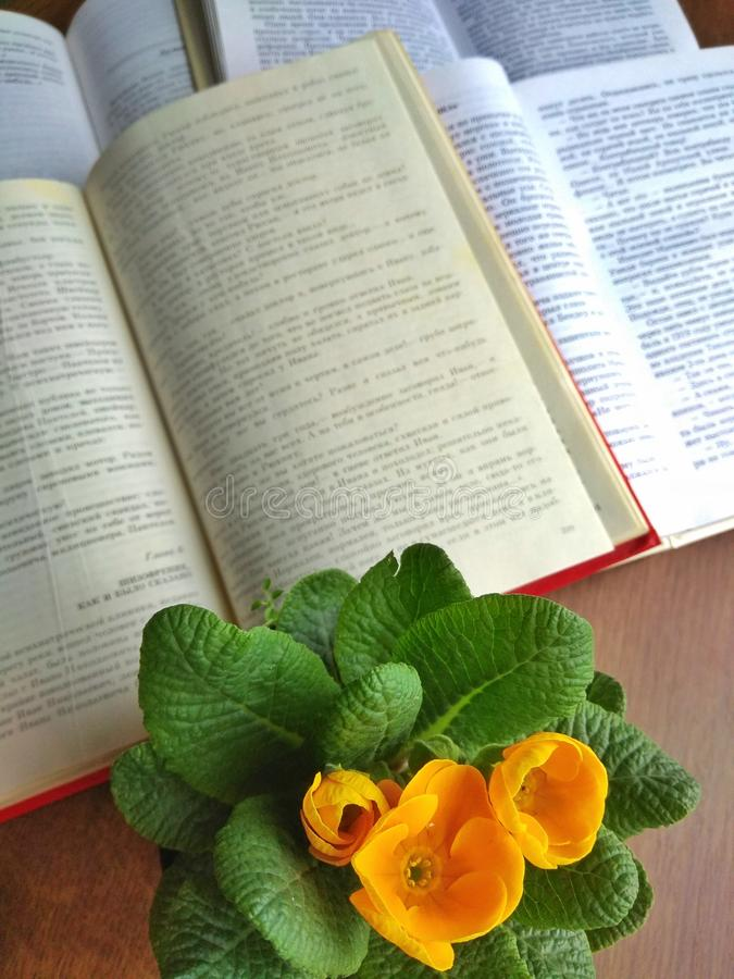Livres ouverts sur une table en bois près d'une fleur jaune dans un pot photographie stock