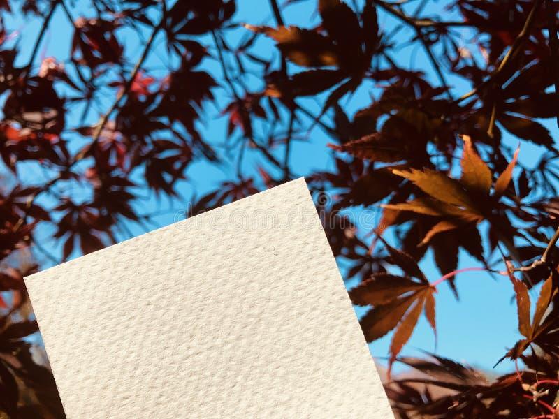 Livro Branco vazio com as folhas de bordo vermelhas bonitas fotos de stock