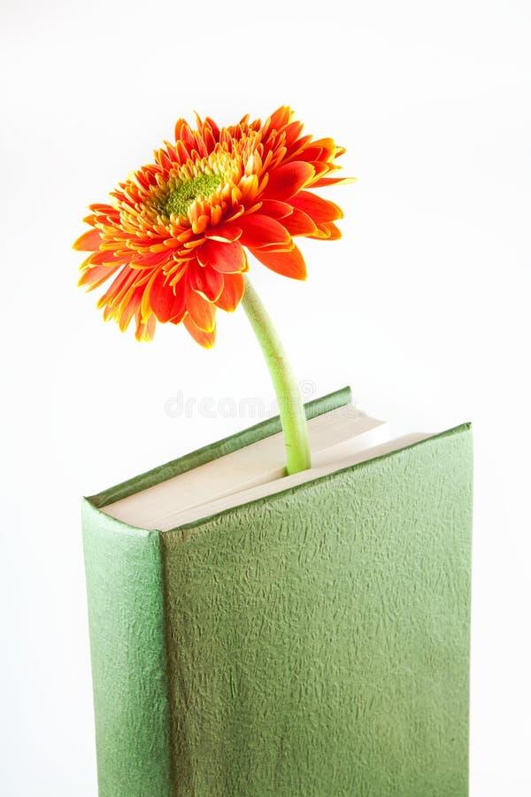 Livro com flor imagens de stock royalty free