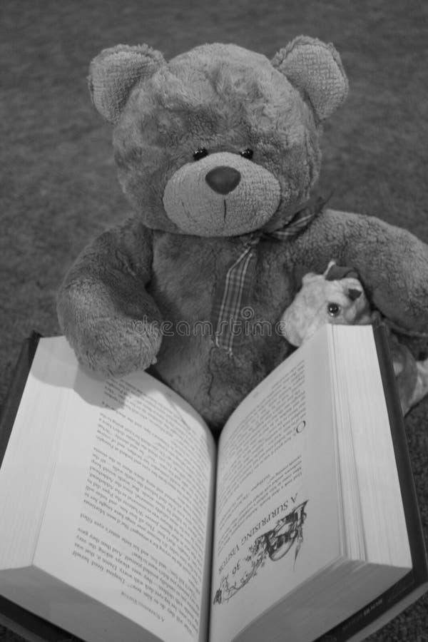 Livro de leitura do urso imagem de stock royalty free