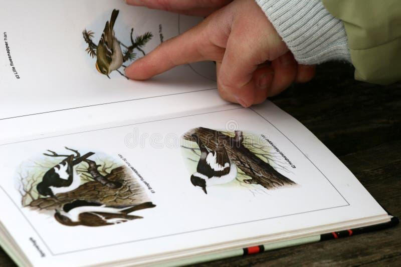 Livro do pássaro fotografia de stock