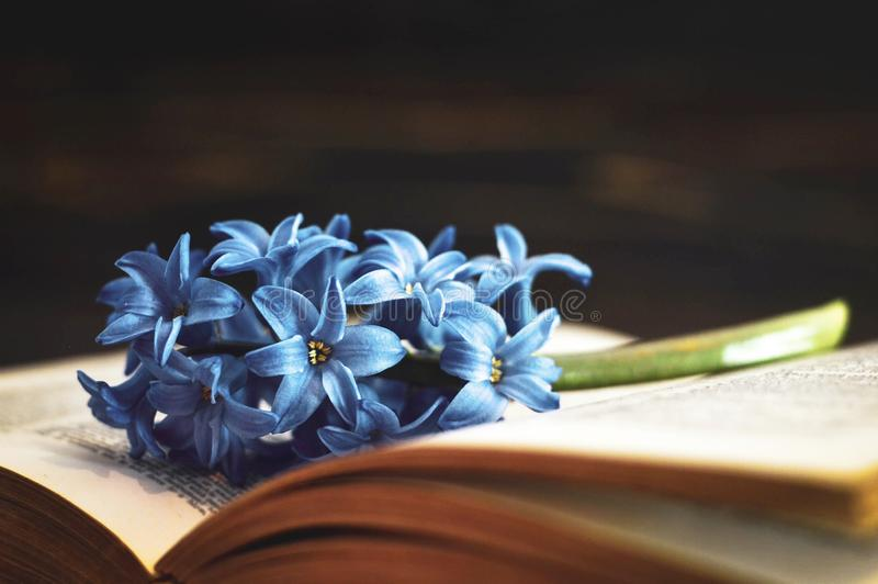 Livro e flor no fundo escuro imagem de stock