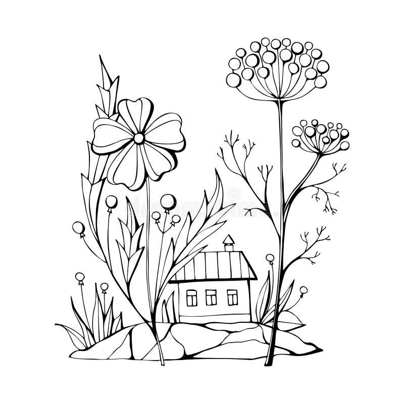 Livro Para Colorir Com A Flor Bonita Do Crisantemo Ilustracao Do