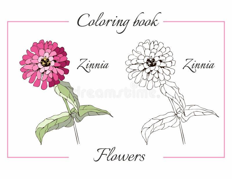 Livro Para Colorir Com A Flor Bonita Do Zinnia Ilustracao Do Vetor
