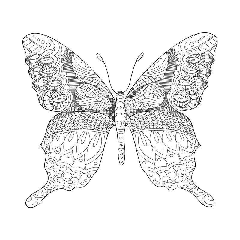Livro para colorir da borboleta para o vetor dos adultos ilustração do vetor