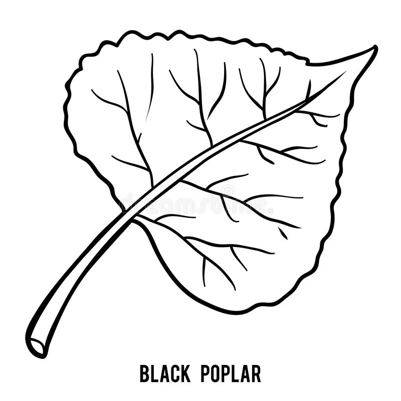 Livro para colorir, folha do álamo preto ilustração royalty free