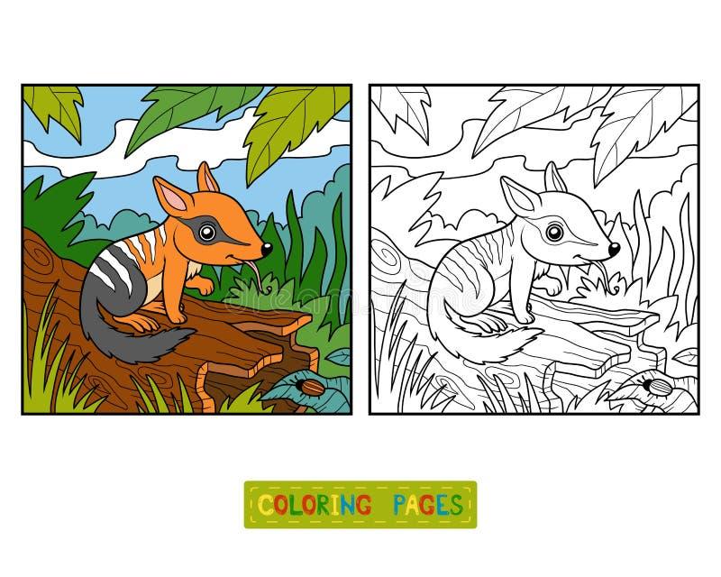 Livro para colorir para crianças, Numbat ilustração royalty free