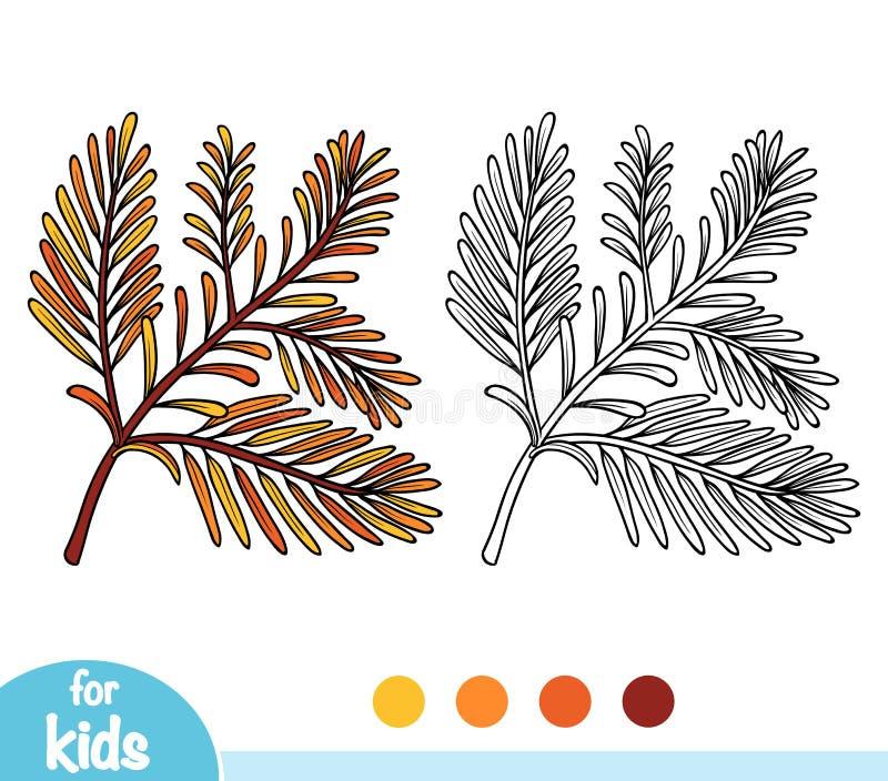 Livro para colorir, ramo da sequoia ilustração do vetor