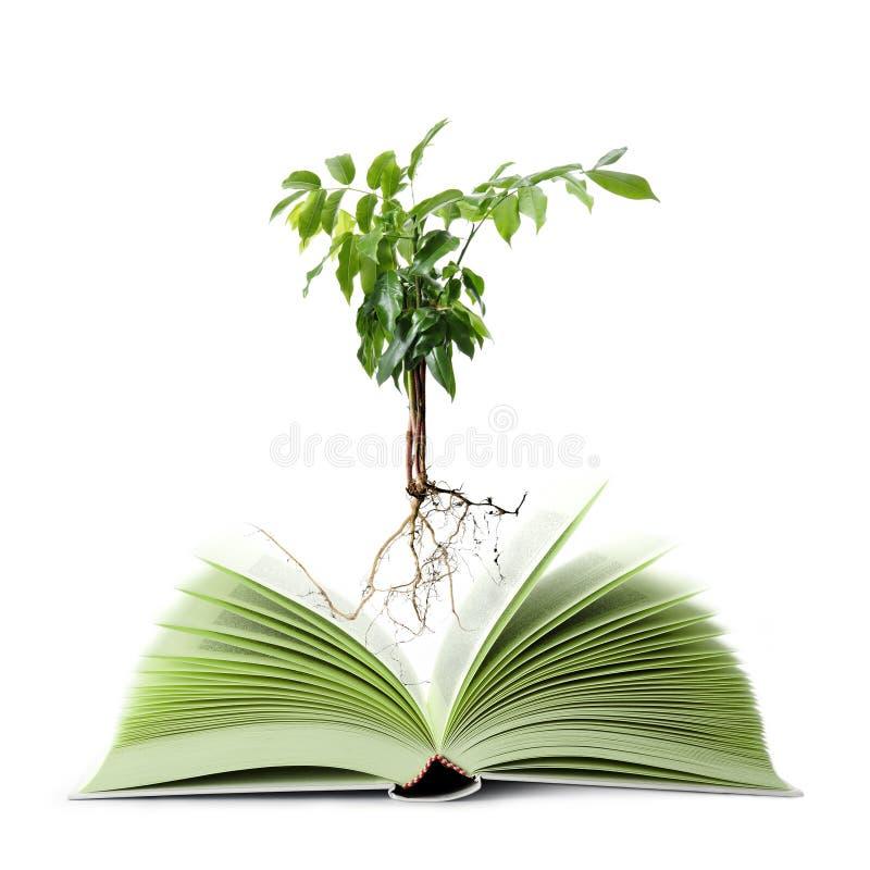 Livro Verde imagem de stock royalty free