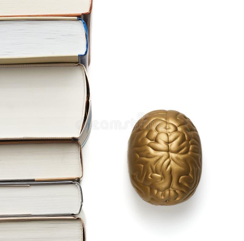 Livros e cérebro do brinquedo isolado no branco