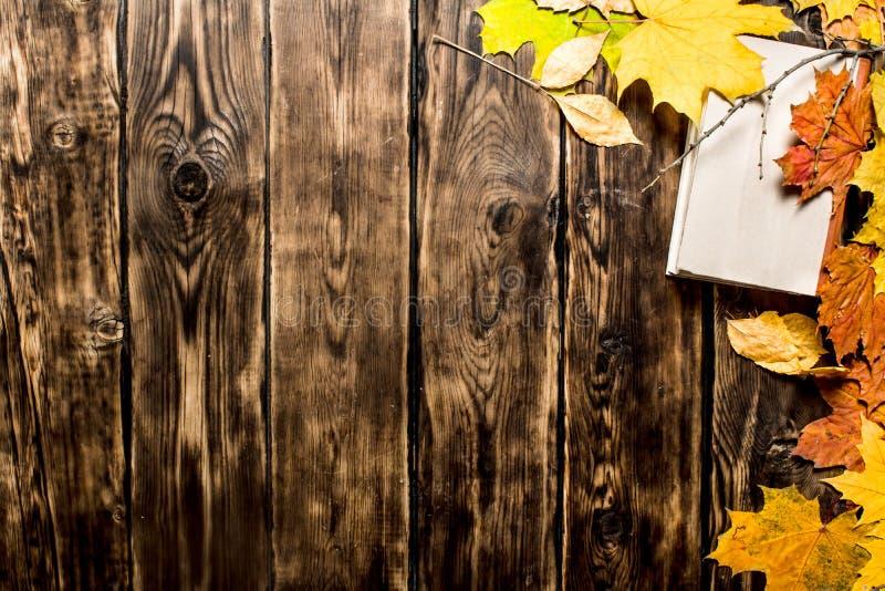 Livros velhos e folhas de outono fotos de stock