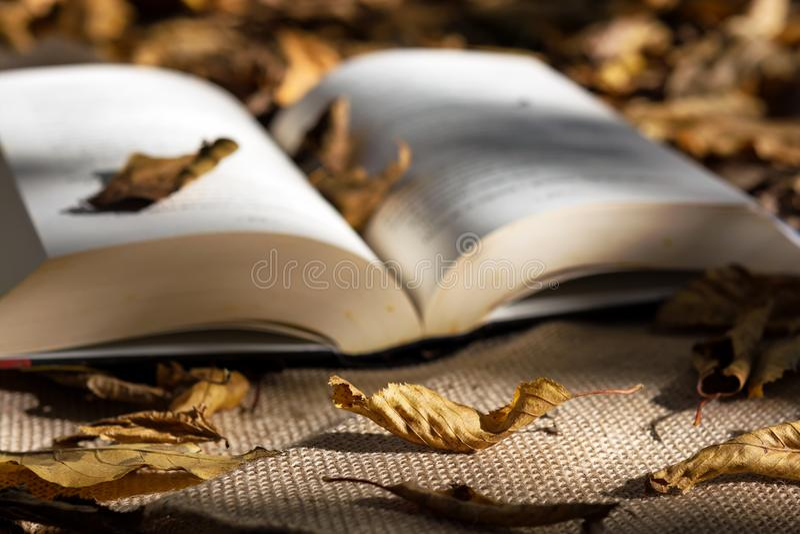 Livros velhos entre as folhas de outono sob a luz solar macia fotos de stock