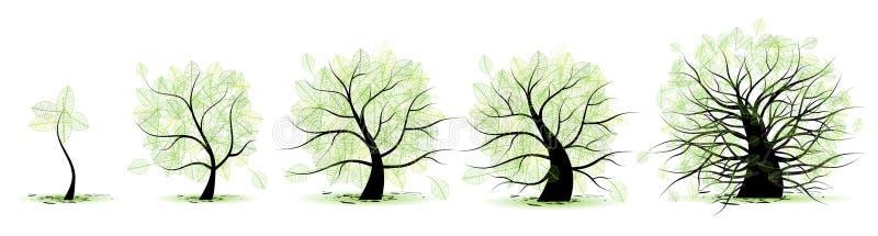 livstid stages treen stock illustrationer