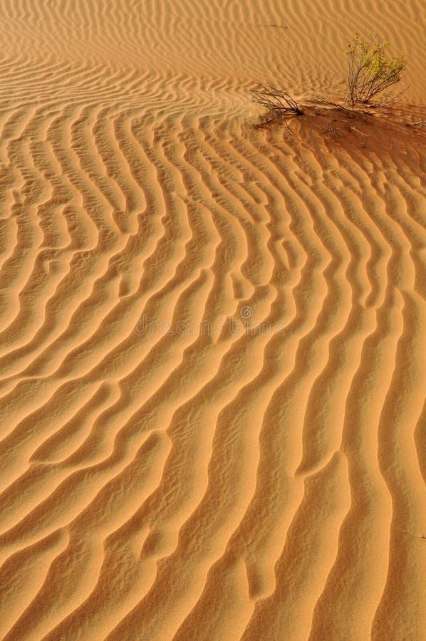 Liwa piaska czochry zdjęcie stock