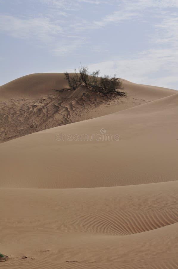 Liwa sanddyn fotografering för bildbyråer